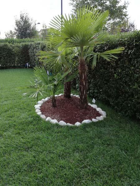 Giardiniere modena carpi manutenzione progettazione - Alberi condominiali in giardini privati ...