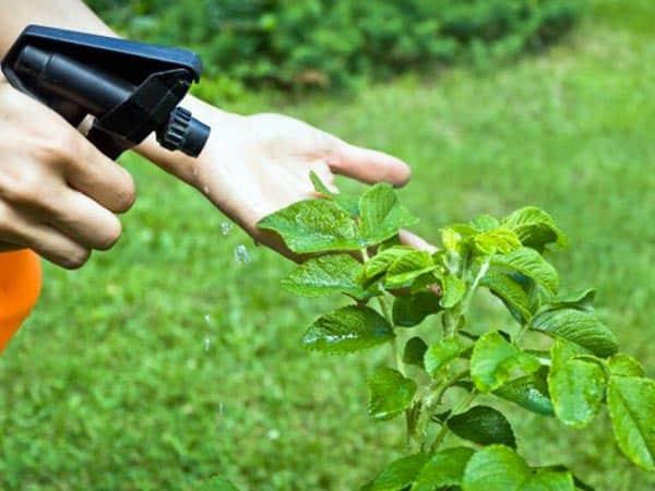 Antiparassitari-per-curare-alberi-Carpi