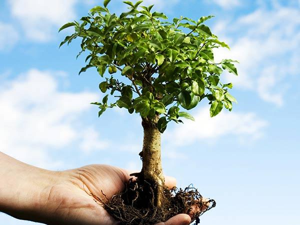 Coltivare-alberi-da-frutto-Carpi