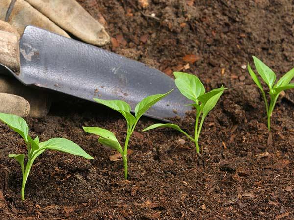 Curare-piante-con-concime-Reggio-Emilia