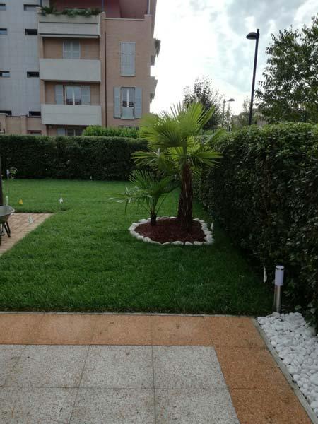 Erba-inglese-per-giardino-Modena