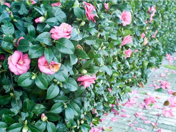 Giardiniere-per-progettazione-giardini