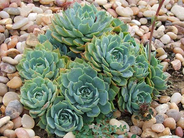 Offerte-concime-per-piante-grasse-Rubiera