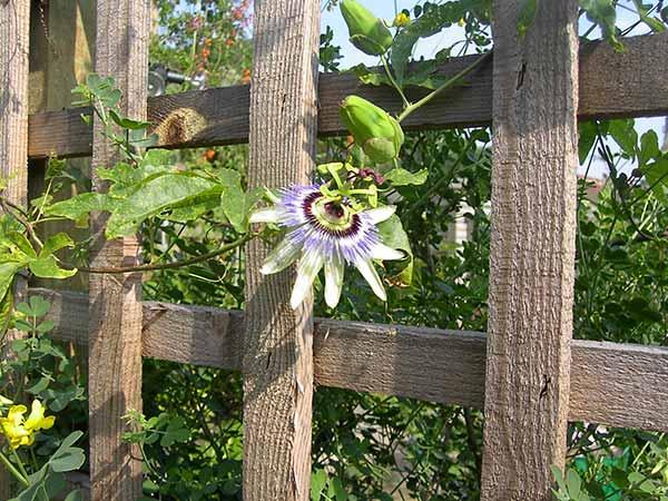 Prezzo-piante-ornamentali-Reggio-Emilia