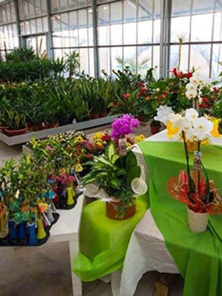 Sun-Garden-fiorista-Reggio-Emilia