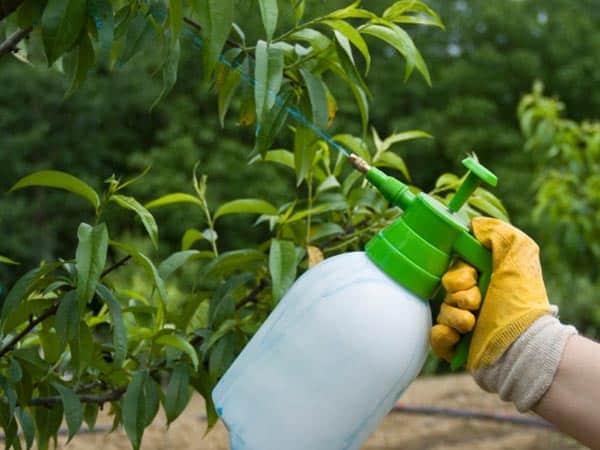 Trattamento-insetticida-alberi-da-frutto-Modena