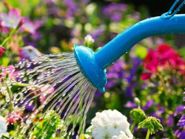 Vendita-Utensili-da-giardinaggio