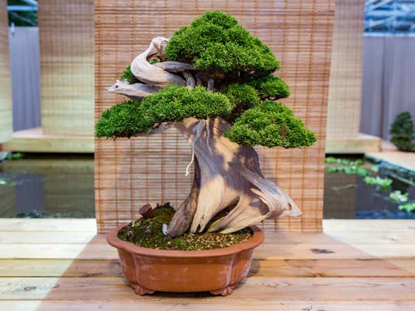 albero-in-miniatura